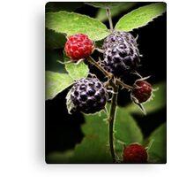 Berry Ripe Canvas Print