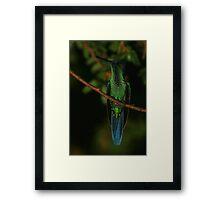 Violet-crowned Woodnymph Framed Print