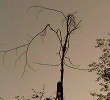 Tree Magic by lilynoelle