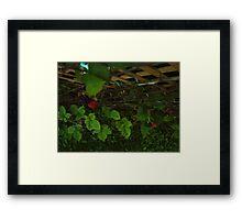 Rasperries Framed Print