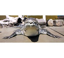 What a croc Photographic Print