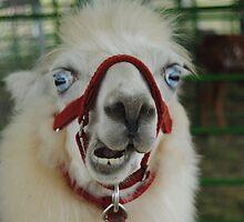 Hello Mr Llama! by farmbrough