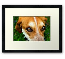 Dog Eyes Framed Print