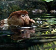 Proboscis Monkey by Di Mellors