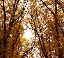 Melbourne - Botanical Gardens by SJM-Photography
