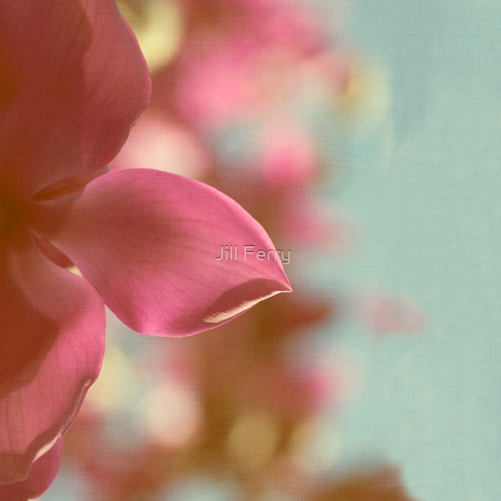 Magnolia Magnificence by Jill Ferry