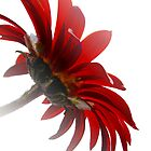 Red&White by Josie Jackson