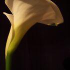 Lily by jonolaf
