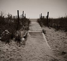 Path to the Beach by Gail Falcon