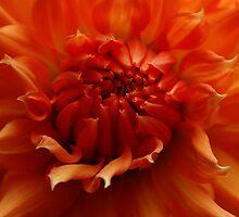 Orange you my dahlia by Kelly-Anne