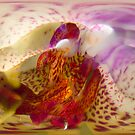 Abstract Orchid by Brian Roscorla