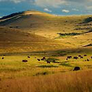 Bison Landscape 1 by Miles Glynn
