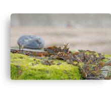 Seaweed Tangle Metal Print