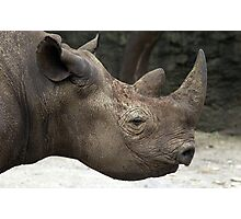 Black Rhinoceros - Eastern & Central Africa Photographic Print