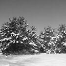Snowy Trees by Linda Miller Gesualdo