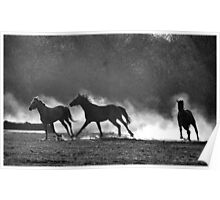 HORSE SILHOUETTES IN BLACK AND WHITE Poster