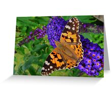 ~ Painted Lady ~ Greeting Card