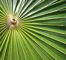 Palm Burst - Key West by kdilts