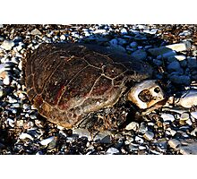 dead turtle Photographic Print