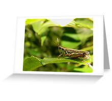 One jump away from safety. Greeting Card