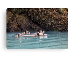 Grizzlies go swimming Canvas Print