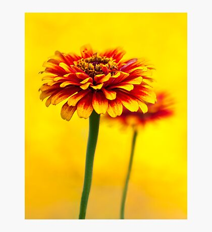 Sea of Yellow Photographic Print