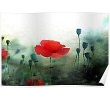 Riverside Poppies Poster