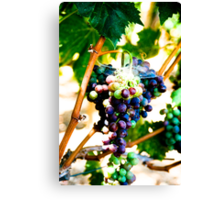 Grapes of Raph Canvas Print