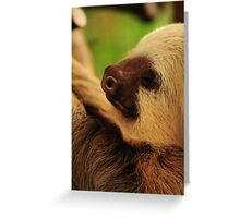 Costa Rica Sloth Greeting Card