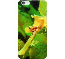 Leafy Seadragon Portrait iPhone Case/Skin