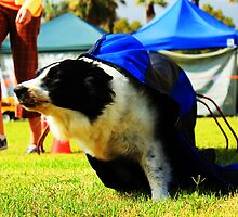 Dog Racer by Joe Randeen