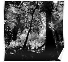 Hillside Trail, Muir Woods National Monument (8/22/2010) Poster