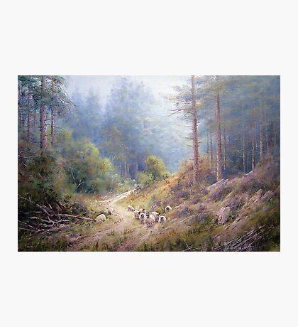 West Wood, Northumberland Photographic Print