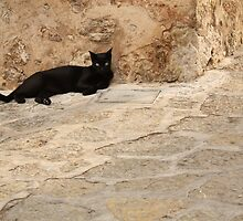 Black cat at Valldemossa by Esther  Moliné