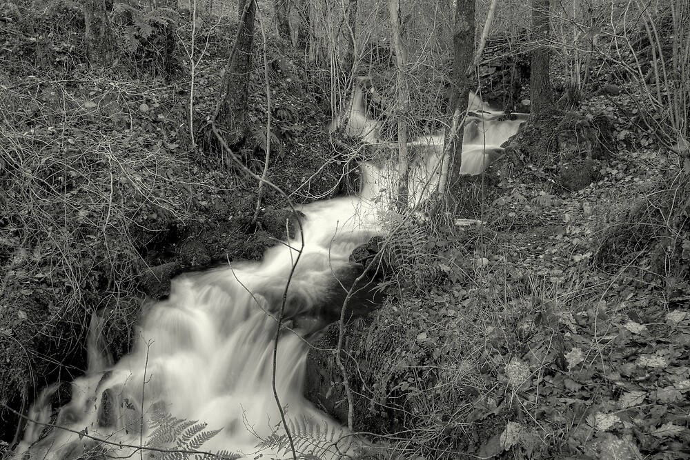 The Stream In The Woods by EvilTwin