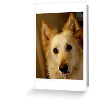 german shepherd dog.. Greeting Card