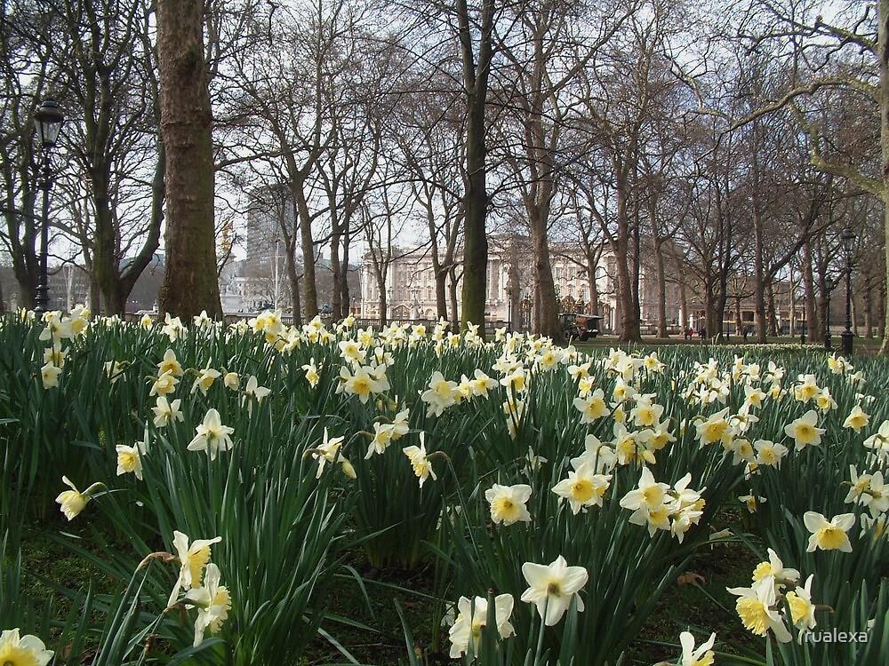Green Park Daffodils  by rualexa