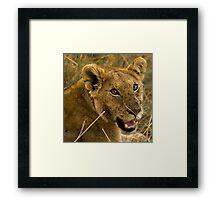 Masai Mara, Kenya. 2009 Framed Print