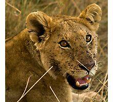 Masai Mara, Kenya. 2009 Photographic Print