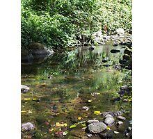 Renfrew Ravine - emerald backwater Photographic Print