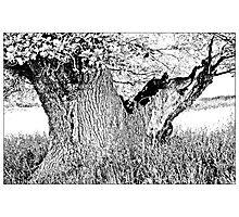 Escot Tree Photographic Print