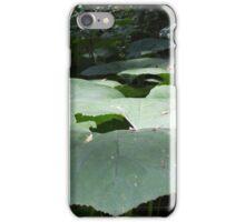 Renfrew Ravine - A cluster of giant umbrella-type plants  iPhone Case/Skin