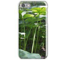 Renfrew Ravine - spindly stocks of giant umbrella-type plants iPhone Case/Skin