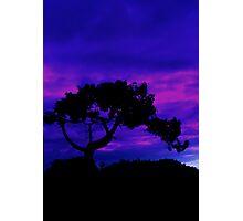 Tree silhouette. Photographic Print