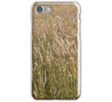 Sun bleached long grass iPhone Case/Skin