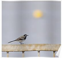 Riverside Wagtail Poster