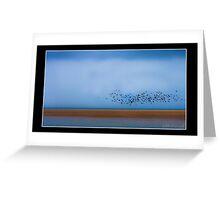 Flock of Sea Gulls Greeting Card
