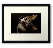 Did You Say Dinner?! Framed Print
