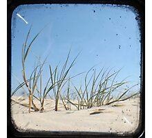 Grassy Dunes - TTV #1 Photographic Print