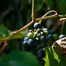 Vineyard Chateau Cooper&#x27;s Marsh by Mike Oxley